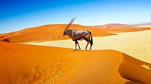 El reino del desierto de Namibia