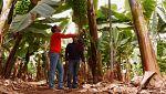 Aquí la tierra - Lo que no sabías sobre los plátanos
