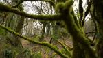 El escarabajo verde - Bosques para el futuro