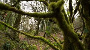 Bosques para el futuro