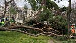 Un niño de 4 años muere al caerle encima un árbol en el parque de El Retiro