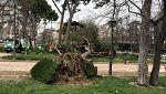 Muere un niño de 4 años tras caerle un árbol en el parque de El Retiro en Madrid