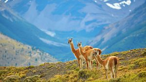 Patagonia salvaje: Montañas de fuego