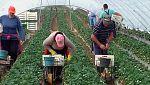 Medina en TVE - La agricultura sostenible del Islam