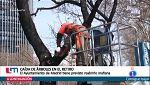Tala de árboles en Madrid