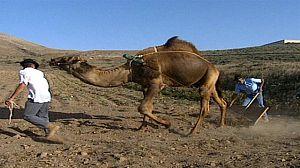 Camelleros