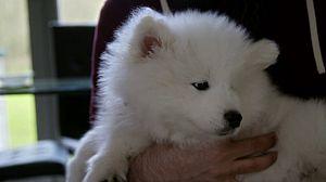 El mundo de los cachorros: Conoce a mi nueva familia, 3