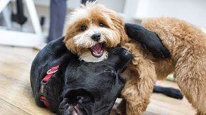 El maravilloso mundo de los cachorros, 5