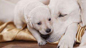 El maravilloso mundo de los cachorros, 6