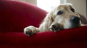 El maravilloso mundo de los cachorros, 8