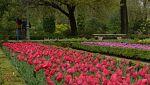 Aquí la tierra - La leyenda de los tulipanes