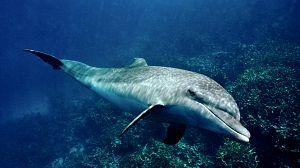 Delfines. Un espía en la manada - Episodio 1