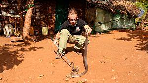 Criaturas salvajes con Dominic Monaghan: cobra escupidora