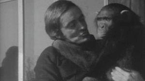 Los primates (I)