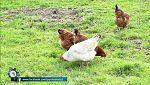 Para todos La 2 - Reportaje sobre nuestro consumo de carne que está por encima de lo saludable