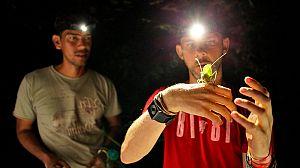 Criaturas salvajes con Dominic Monaghan: el escarabajo Titán