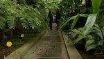 Aquí la tierra - El mesías de las plantas
