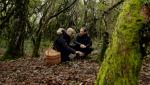 El señor de los bosques - Sierra de Francia