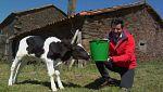 Aquí la tierra - ¡Larga vida a las vacas lecheras!