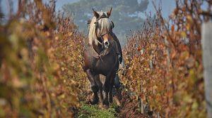 La revolución verde del vino