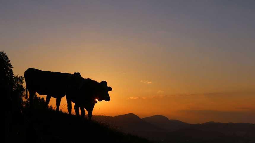 Temperaturas significativamente altas en el interior de Andalucía, en amplias zonas de ambas Mesetas y en la depresión del Ebro