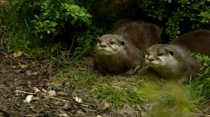 La vida secreta del zoo. Episodio 8