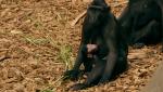 Otros documentales - La vida secreta del zoo. Episodio 9