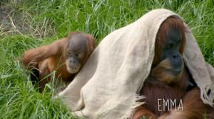 La vida secreta del zoo. Episodio 11