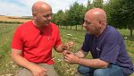 Aquí la tierra - Plantas medicinales en Navarra