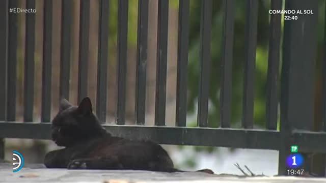 Black cat 23 latino dating