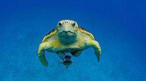 Bahamas azules: Mar abierto