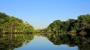 Brasil. Una historia natural: El bosque inundado