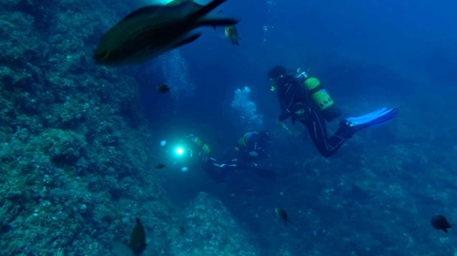 El escarabajo verde - Observadores del mar - ver ahora