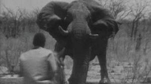 El rodeo de los elefantes