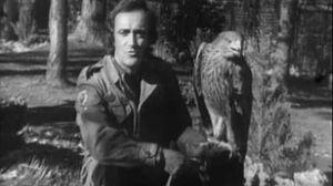 El águila imperial