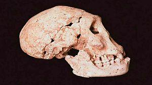 La España prehistórica. Primera parte