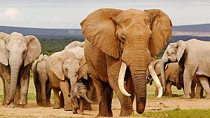 Elefantes fugitivos