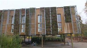 Construcciones ecológicas: La Eco-construcción y los árboles