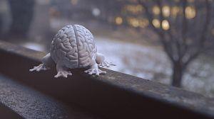 El poder del cerebro - Avance