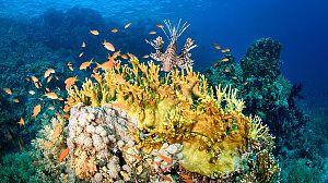 El mar arábigo: Los carnívoros del arrecife de coral