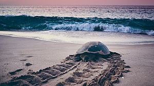 El mar Arábigo: El legado de una tortuga