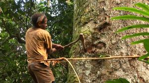 Los últimos africanos: Baka, cazadores de la selva
