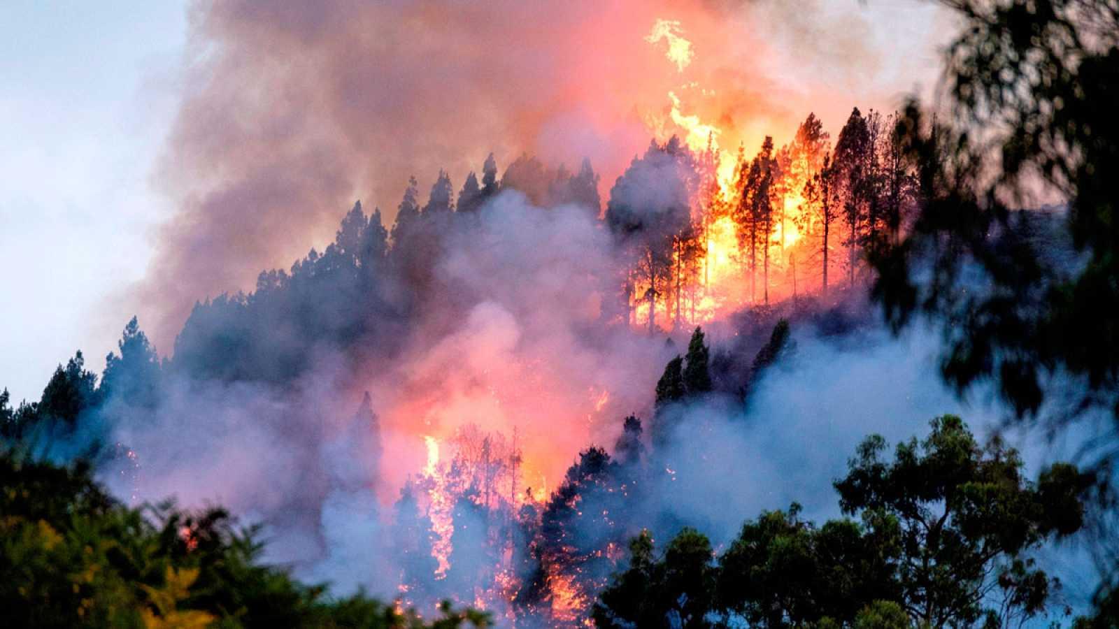4.000 evacuados por el incendio de Gran Canaria, que entra en el Parque Natural de Tamadaba