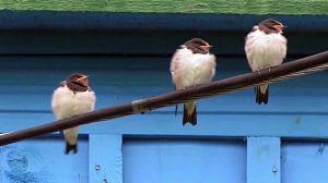 Aves desahuciadas