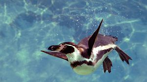 Dinastías: Pingüinos