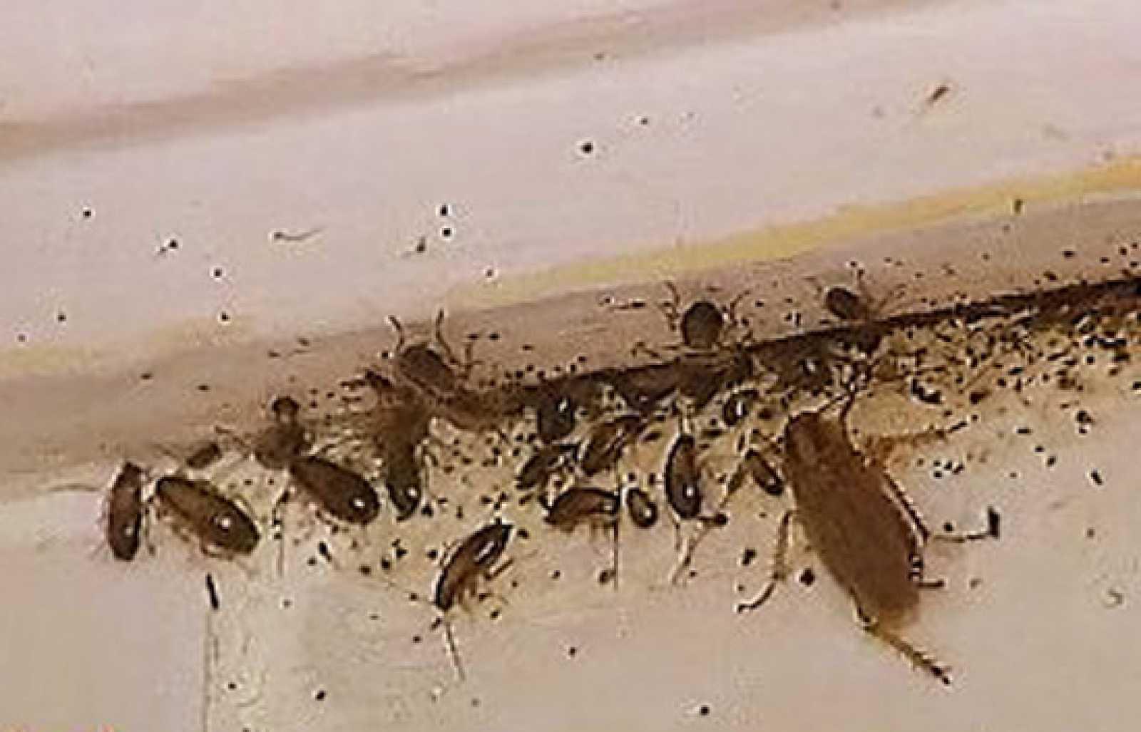 Espa a directo infestados de cucarachas - Bichos en casa por humedad ...