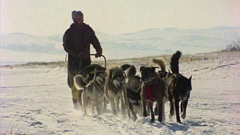 Iditarod. 1000 millas sobre hielo II