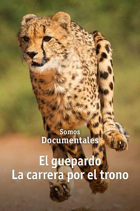 El guepardo. La carrera por el trono