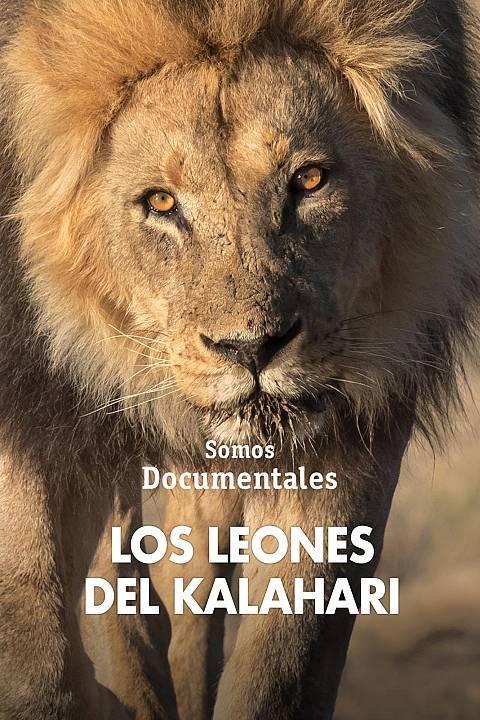 Los leones del Kalahari