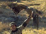 El hombre y la tierra - La doma del águila real para cazar raposos